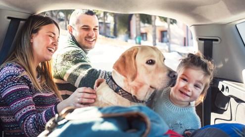 Chien dans la voiture : Comment les amis à quatre pattes se sentent à l'aise sur le chemin